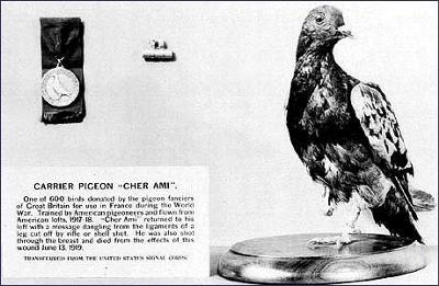 Cher Ami at the Smithsonian Institution