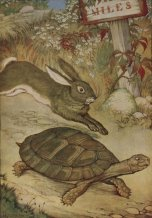 The-Tortoise-and-the-Hare